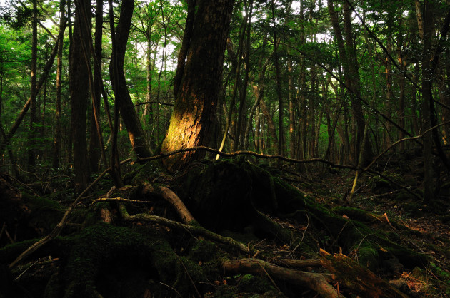 Aokigahara_forest_01