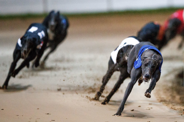 Good News winner of the BoyleSports Irish Greyhound Derby