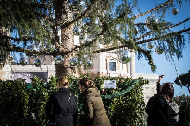 Italy: Tree of Piazza Venezia