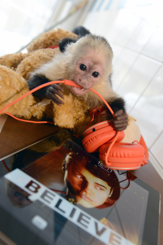 Justin Bieber's monkey at animal shelter in Munich