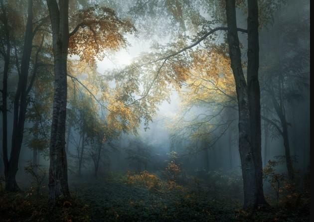 Veselin Atanasov, Bulgarian with image Early Autumn