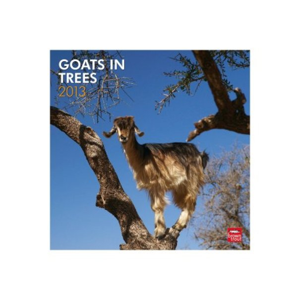 Goats In Trees Calendar 2012 14 of the oddes...