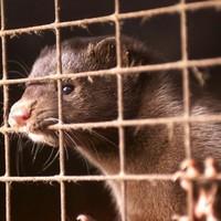 Poll: Should we ban fur farming in Ireland?