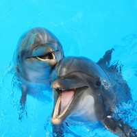 Study finds dolphins use names to call each other