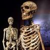 Spanish dig seeks prehistoric ancestors of Europeans