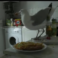 Seagull steals entire dinner... then gets its comeuppance
