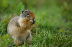 LA park evacuated after squirrel found with deadly plague bacteria