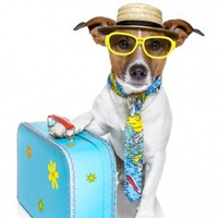 In an emergency situation your pet can now travel without its passport