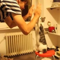 This cat gives cooler high fives than you or anyone you know