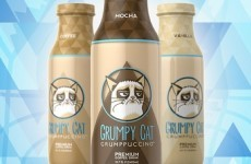 Grumpy Cat to release own brand of coffee drink