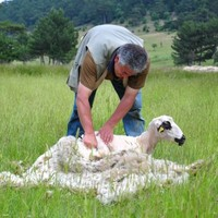 Australia wants our tree surgeons and sheep shearers