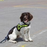 Ralph the dog helps Revenue seize €1.5 million of heroin at Rosslare port