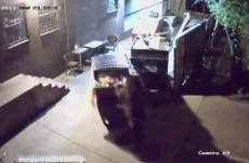 VIDEO: Bear steals whole dumpster full of leftover food