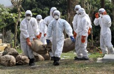 Deadly strain of bird flu may have passed between people for first time