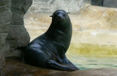 Zookeeper suspended for allegedly punching seal