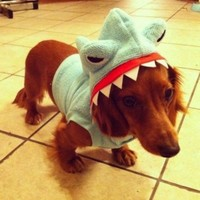 8 individuals who are really excited about our Sharknado live blog