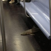 Dead shark found on New York subway; internet freaks out