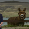 Update: Did you see a donkey photobombing the RTÉ news yesterday?