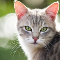 To cat-ch a killer: New pet database nabs UK murderer