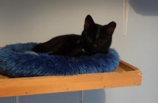 Blind kitten called Lorcan shows the need for spaying feral cats
