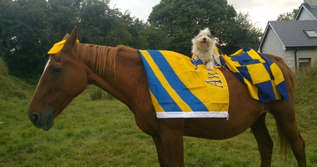 Your Dog on a Horse in Clare Colours Picture of the Day