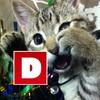 WE'RE HIRING! DailyEdge.ie is seeking new talent