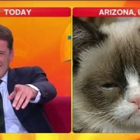 WATCH: Morning show host loses it during Grumpy Cat interview