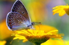 Population of butterflies has halved since 1990