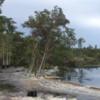 Underwater sinkhole suddenly swallows a dozen trees