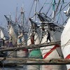 """Favourite in Australian election wants to buy Indonesian """"smuggler boats"""""""