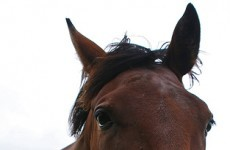 Thousands of thoroughbred horses slaughtered 'for meat'