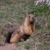 Marmot meat blamed after teen dies of bubonic plague in Kyrgyzstan