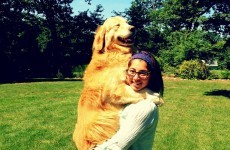 8 heartwarming moments where pets and their owners are reunited