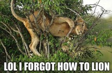 10 animals who forgot how to be animals