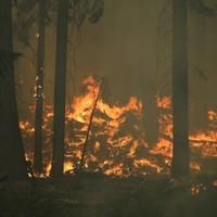 Explainer: How do wildfires happen and why do they spread?
