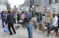 Demonstrators picket Irish embassies over greyhound exports