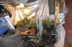 Pics: Seven arrested and cannabis plants seized in Dublin Garda raid