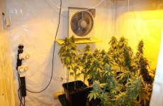 Two charged after seizure of cannabis plants worth €100,000