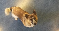 Gonzo the dog picked up by owner at Blackrock Garda Station