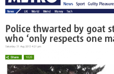The best 'maverick goat' headline you'll ever see