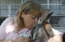 Woman moves into zoo with her pet kangaroo