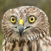 Bog action group criticised for 'appalling persecution' of endangered bird