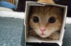 Cats and boxes: The great love affair of our time