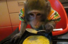 Oh this?  It's just a monkey eating soup with a spoon