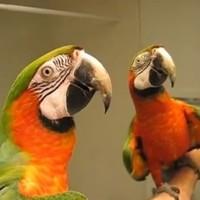 WATCH: Talking macaw tells noisy bird to shhhh