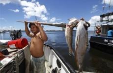 Shark warning in Hawaii after 1,400 tonne treacle spill