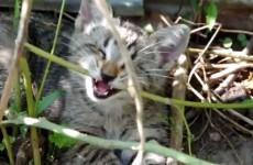Meet Oskar, the adorable blind cat