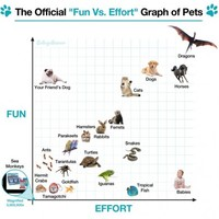 Which pet is the most fun with the least amount of effort?