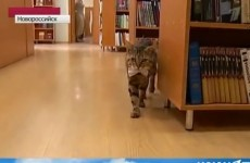 A cat has been hired as a library assistant in Russia