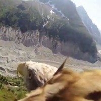 Soar like an eagle with this amazing point-of-view video